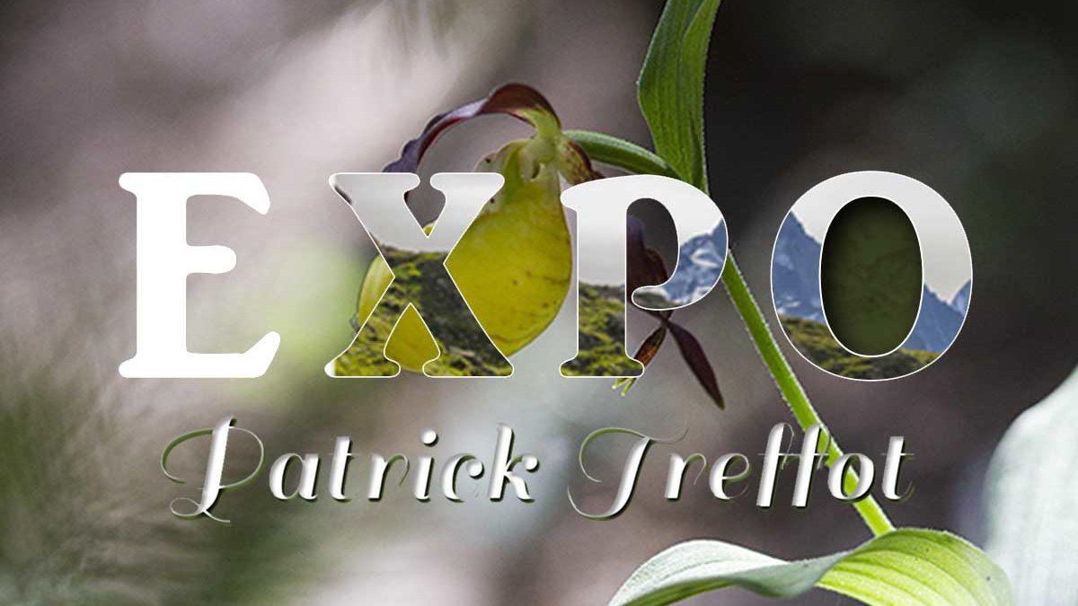 Exposition de Patrick Treffot, photographe nature