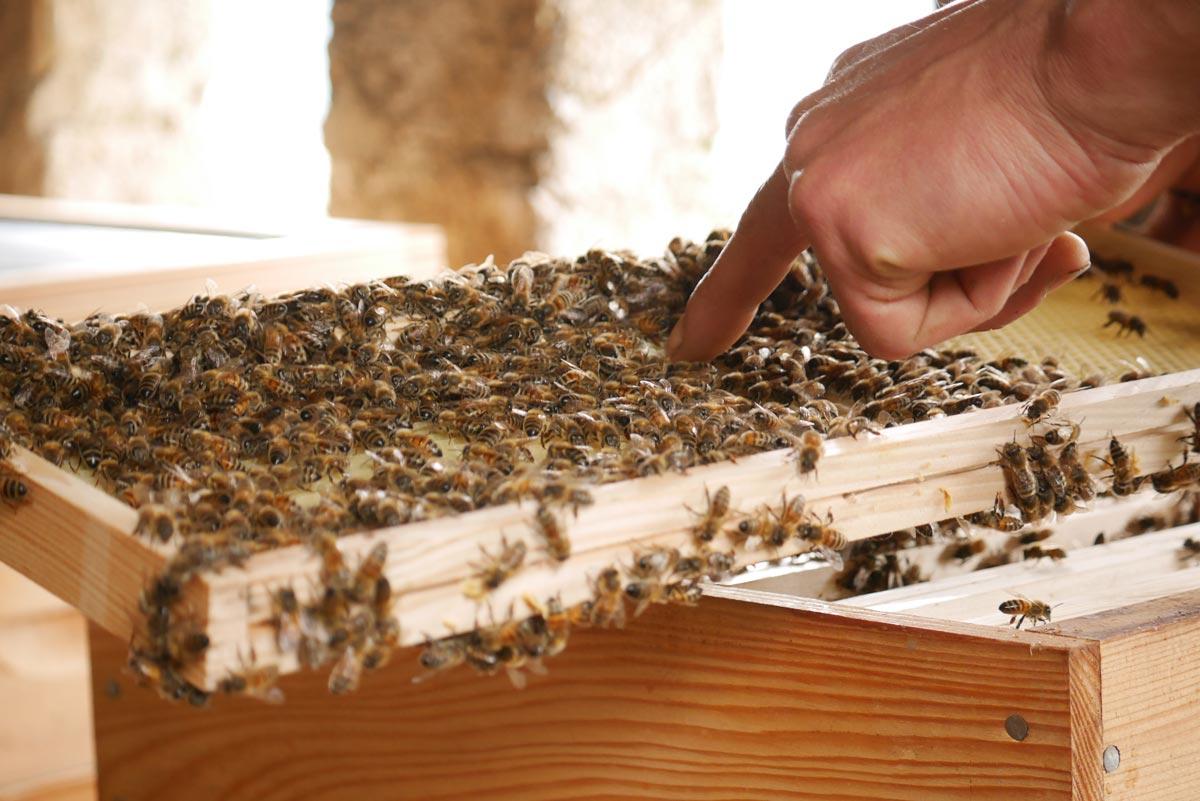 ruche à Manicle